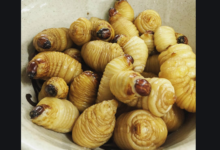 Photo of Palm tree worms: Why on earth should I eat palm tree worms?