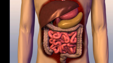 Photo of 5 Foods that keeps your digestive system healthy