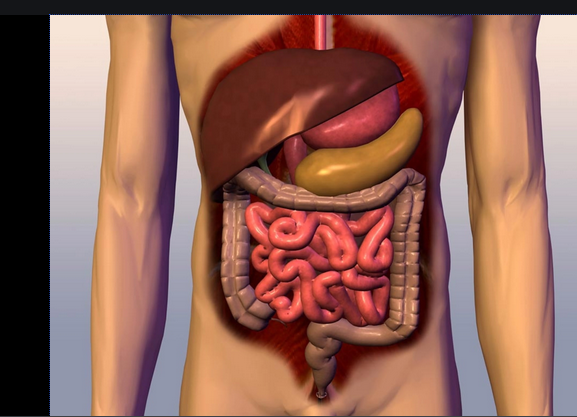 Photo of 8 Foods that keeps your digestive system healthy