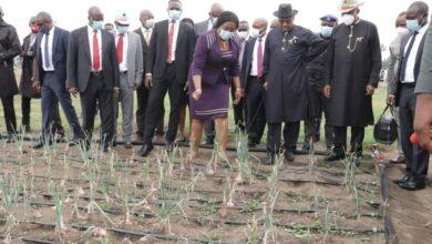 Photo of Akwa Ibom unveils biggest Onions, Tomatoes farm in Southern Nigeria
