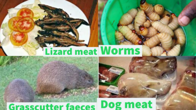 Photo of Grasscutter faeces, Lizards, Worms and 12 unconventional foods Nigerians eat