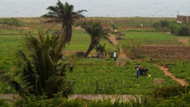 Photo of African Dev't Bank is giving farmers $20 loan in Togo; is the money fair enough?