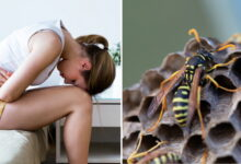 Photo of Doctors Are Having To Warn Women Not To Put Wasps Nests In Their Vaginas