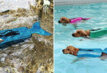 Photo of These Mermaid Life Jackets For Dogs Will Keep Your Pup Safe And Sparkly