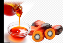 Photo of Amazing benefits of applying palm oil in your hair